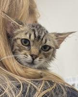 Loretta the Kitten
