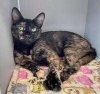 Rosalyn the Cat