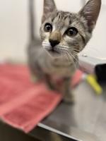 Tia the Kitten