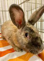 Haley the Rabbit
