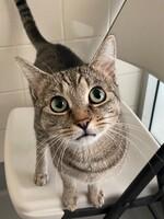 Kedi the Cat