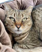 Clover the Cat