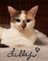 Lilly the Cat