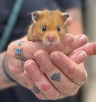 Miss Butters the Rodent