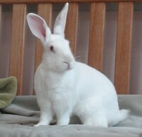 Lilly the Rabbit