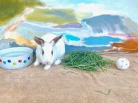 Blanca the Rabbit