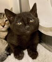Gia the Kitten