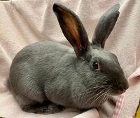 Monica the Rabbit