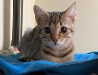 Ping Ping the Kitten