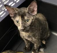 Betty  Lou the Kitten
