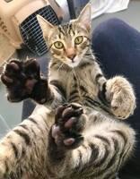 Rydell the Kitten