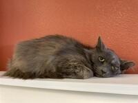 Panthor the Cat