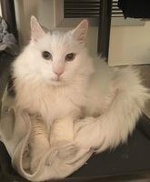 Beau the Cat