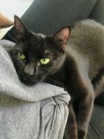 Bellatrix the Cat