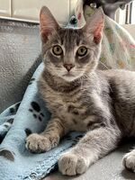 Barnacle the Kitten