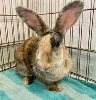 Jessica the Rabbit