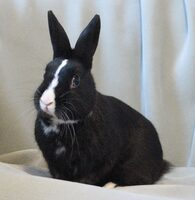 Pedro the Rabbit